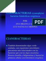 CIANOBACTERIAS_Cardona_y_Cano.ppt