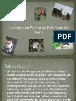 animalesenpeligrodeextincindelper-110118143121-phpapp01.pptx