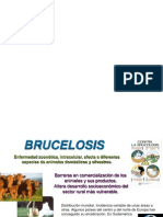 brucelosis.ppt