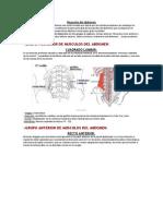 Musculos del abdomen.docx