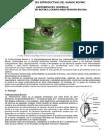 Dra. Beatriz Galindo, ENFERMEDADES VENEREAS, BOVILAB S.R.L..pdf