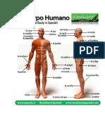 partes del cuerpo.docx