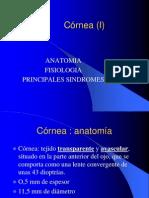 cornea.ppsx