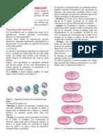 Estrategias de reproducción.docx