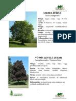 faismerteto.pdf