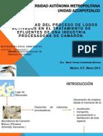Industria Del Camarón