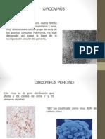 circovirus expo.pptx