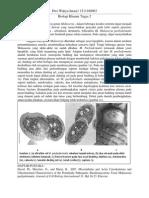 Basidiomycetous Yeast Malassezia pachydermatis