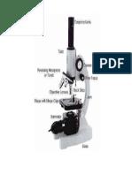 gambar mikroskop