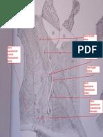 Práctica 4º Belorcio 2/2.pdf