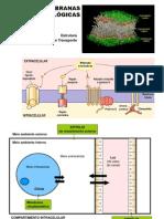 Bioeletrogenese.ppt