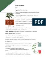 Tejidos Vegetales.doc