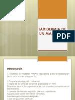 TAXIDERMIA DE UN MAMÍFERO.pptx