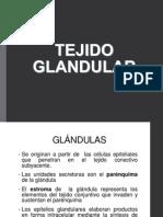 TEJIDO GLANDULAR.pptx
