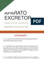 sistema excretor.pptx