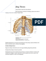 Anatomi Dinding Thorax.doc