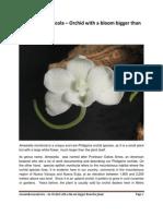 Amesiella monticola.pdf