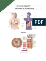 L'apprareil digestif.pdf