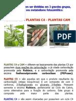 AULA 10 Plantas C3 C4 Cam PDF.pdf