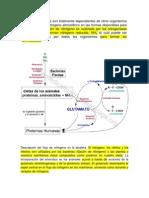 1.1 METABOLISMO DEL NITROGENO.docx