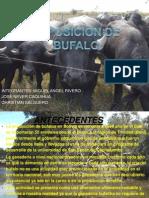 BUFALA.pptx