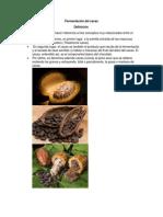 Fermentación del cacao.docx