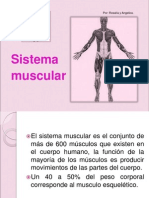 Sistema-Muscular.ppt
