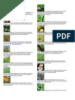 Plantas medicinales más comunes.docx
