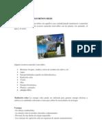 RECURSOS NATURALES RENOVABLES.pdf