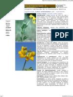 Lotus corniculatus Lam.pdf