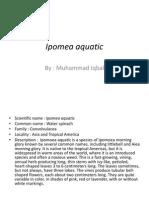 Ipomea Aquatic Pembentangan