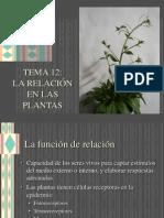 12_relacion_plantas.pdf