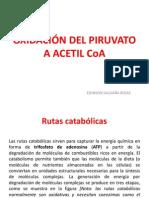 002-OXIDACIÓN DEL PIRUVATO.pdf