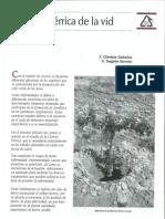 Clorosis férrica de la vid.pdf