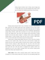 Anatomi Dan Fisiologi  Kandung Empedu