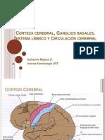 Corteza cerebral, Ganglios basales, Sistema límbico.pptx