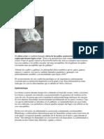 Cólera aviar.docx
