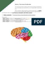 Lóbulos y funciones Cerebrales.docx