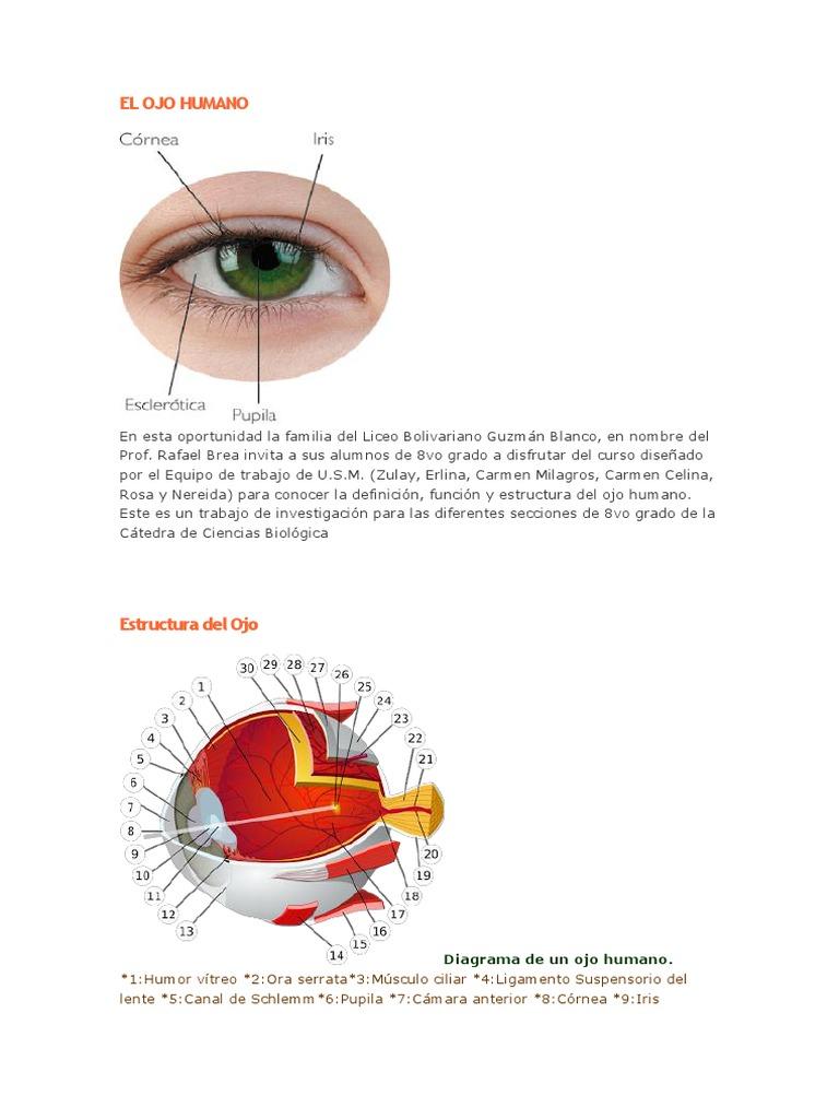 Lujoso Diagrama De Marcado Del Ojo Humano Colección - Anatomía de ...