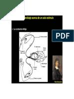 habituacion y sensibilizacion.pdf