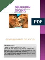 REPRODUCCION PORCINA.pptx