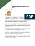 organismos procariotas y eucariotas.docx