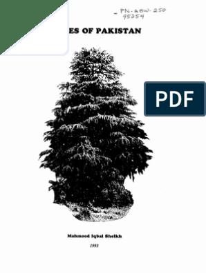 Trees of Pakistan pdf   Trees   Pinophyta