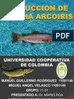 producciondetruchaarcoiris-110329200150-phpapp02.ppt