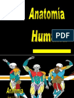 Anatomia 1B.ppt