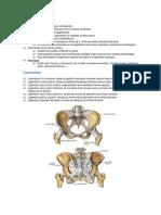 sacroiliacos ligamentos.pdf