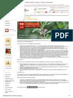 Intretinere Plante Goji - Plante Goji - Fructe Goji, Fructele Sanatatii