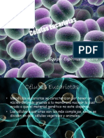 Células Eucariotas.pptx