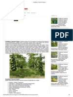 Klasifikasi Tanaman Pepaya.pdf
