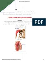 Musculos del hombro _ Sistema muscular.pdf